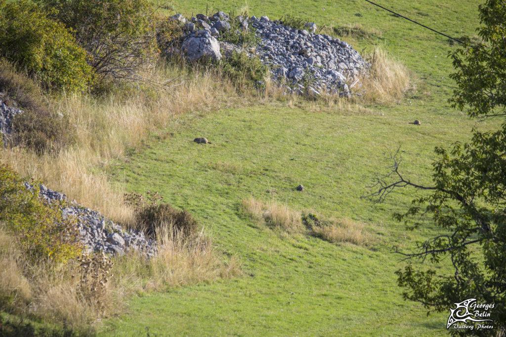 Circuit des marmottes Valberg