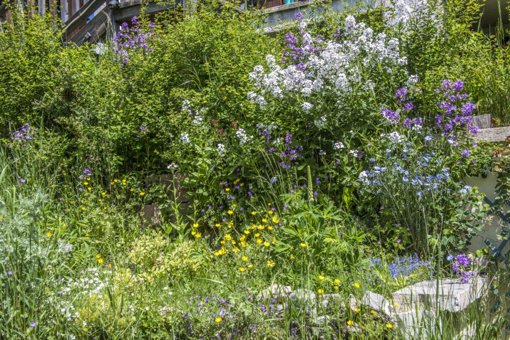 Jardin chalet Sainte-Marie Valberg - Chambres d'hôtes
