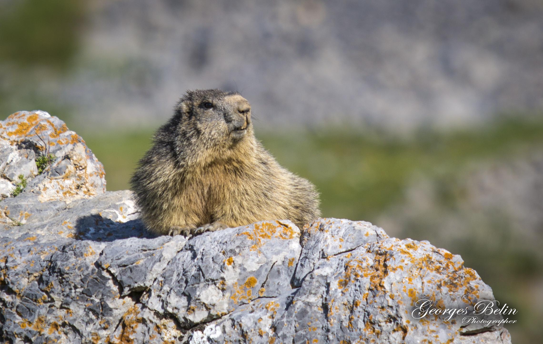Le circuit des marmottes Valberg